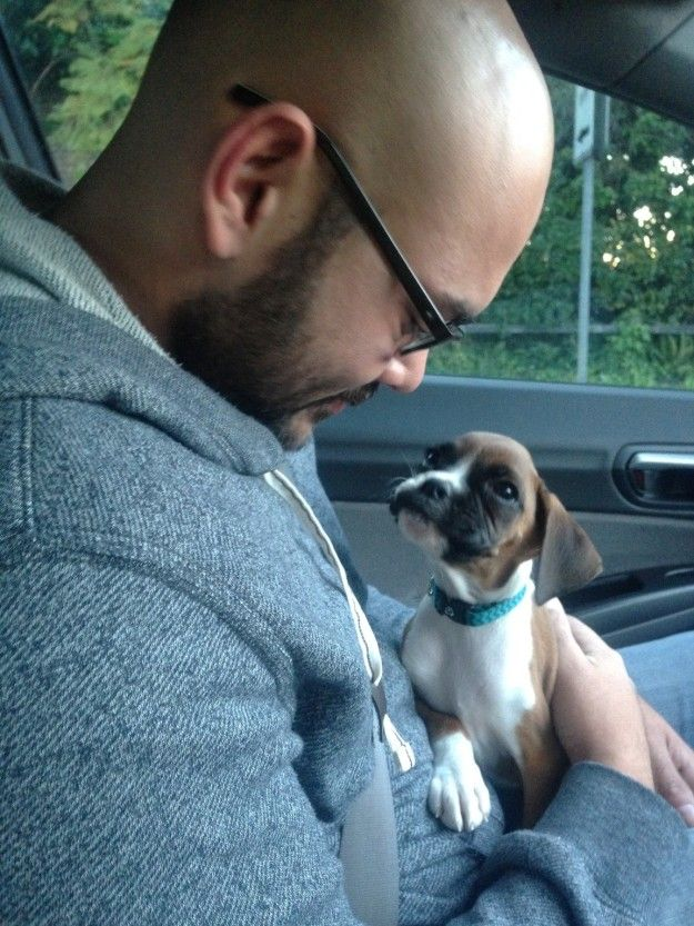 This adorable little lady who just met her new dad. | 17 Dogs Meeting Their Humans For The First Time