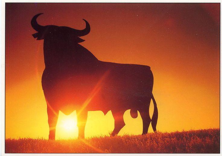 taureau d'osborne au coucher du soleil Wallpaper