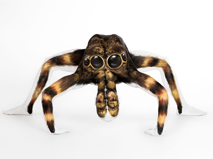 This is not a spider