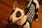 Skeleton Dog (Bull Terrier)