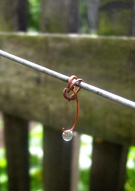 eső by babettee, via Flickr