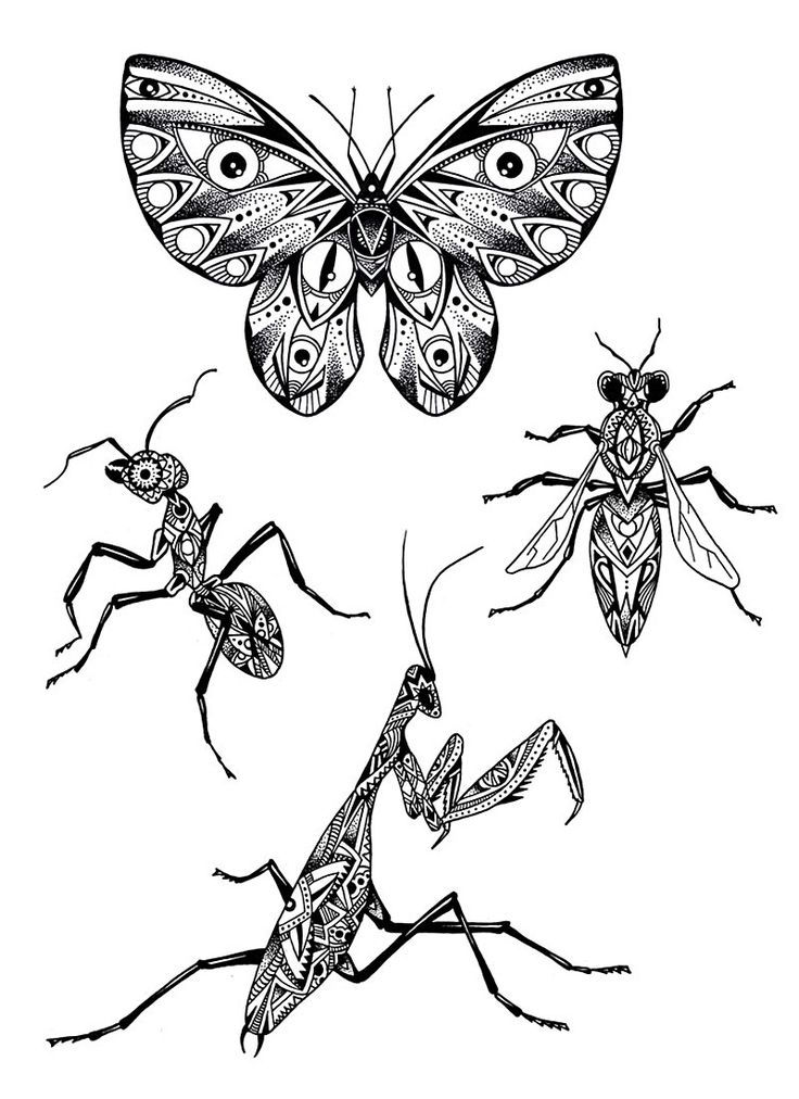 Violette chabanon illustrations tatouages insectes - Coloriage insecte ...