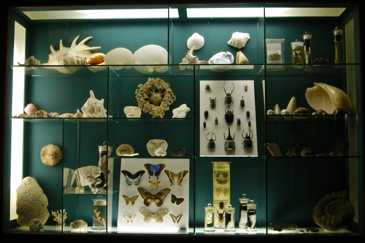 Shells, beetles and butterflies from the Albany Museum, Grahamstown, Eastern Cape.