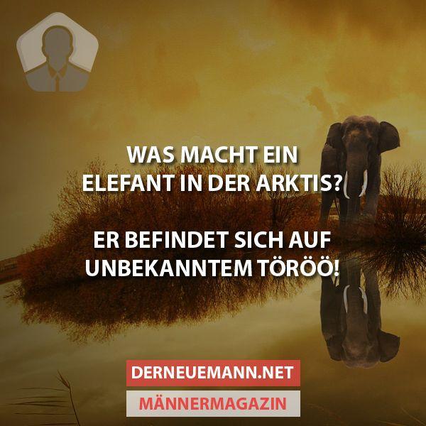 Elefant in der Arktis #derneuemann #humor #lustig #spaß