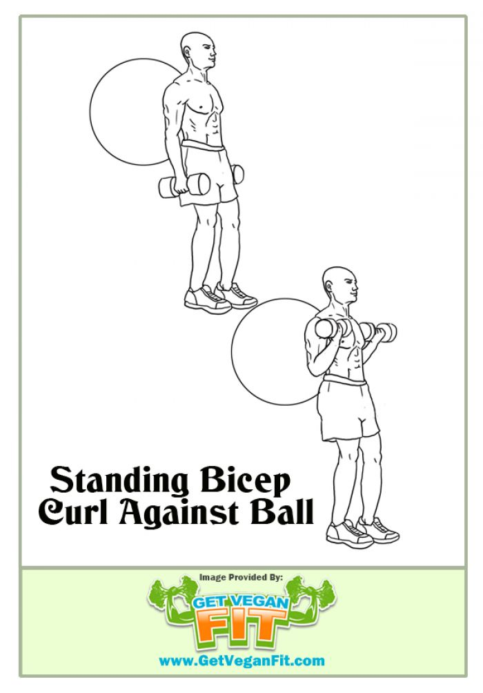 Standing Bicep Curl Using Stability Ball Arm Exercise Illustration