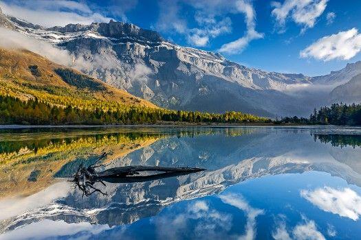 Au bord du Lac de Derborence, dans le canton du Valais, se trouve l'une des rares forêts vierges de Suisse. Ses sapins blancs ont jusqu'à 450 ans.