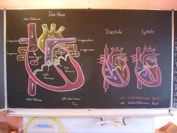 Waldorf ~ 7th grade ~ Human Physiology ~ chalkboard drawing