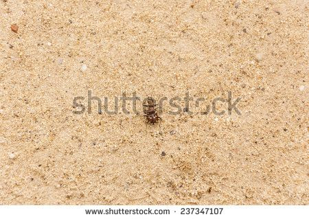 Beetle disguises itself in the sand.