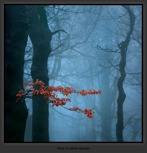 Foggy: Autumn Mists, Art La Photography, Fall Foggy, Foggy Forests, Autumn Forests, Foggy Autumn, Mists Natural, Giant Mountain, Autumn Foggy