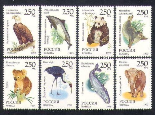 Russia  Wildlife