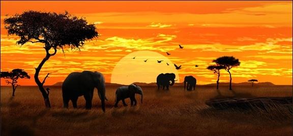Backdrop African Elephant Lionkingparty Safari Africa