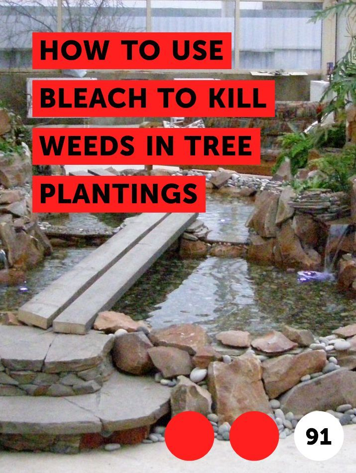 How To Use Bleach To Kill Weeds In Tree Plantings Plants Tree Borers Peach Trees