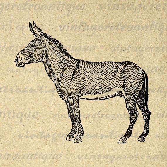 Donkey Graphic Digital Printable Horse Image Download Illustration Vintage Clip Art Jpg Png Eps Print 300dpi No.3090 @ vintageretroantique.etsy.com #DigitalArt #Printable #Art #VintageRetroAntique #Digital #Clipart #Download