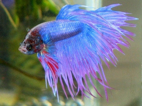 The 2771 best images about betta fish on pinterest betta for What type of water do betta fish need