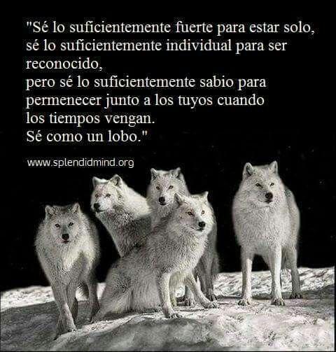 #lobo