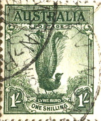 Australian postage stamp featuring the Lyre Bird