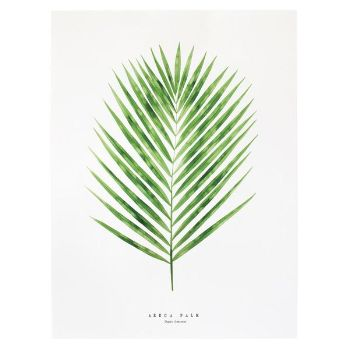 "Unframed Areca Palm Print: A print of a beautiful botanical study by artist Living Pattern. These delicate palms neighbor the Monstera and Lacy tree philodendron under the shade of the rainforest canopy. Common names include ""Butterfly palm"" for their multiple curled upward fanning leaves, and ""Cane palm"" for their matured bamboo cane looking stems. They are one of the most widely used palms for bright interiors and rank high in air purification.  Edition number and print run date stamped on…"