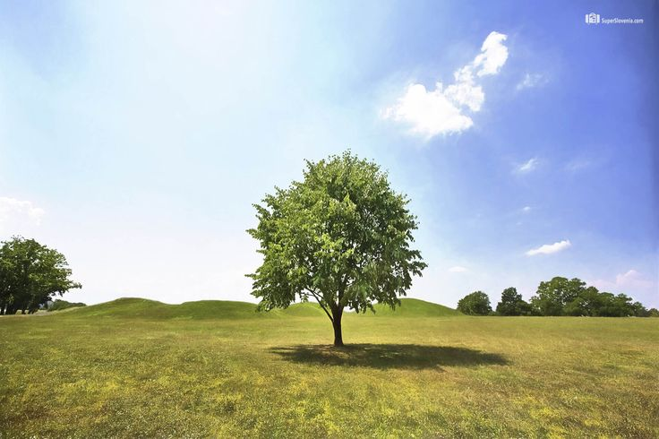Lonely tree, Ljubljana, Slovenia  #tree #nature #ljubljana #slovenia