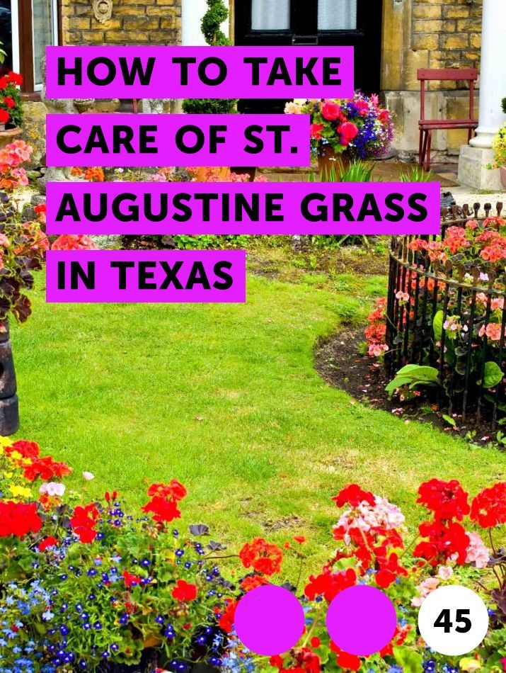 How to Take Care of St  Augustine Grass in Texas   Lawn Maintenance
