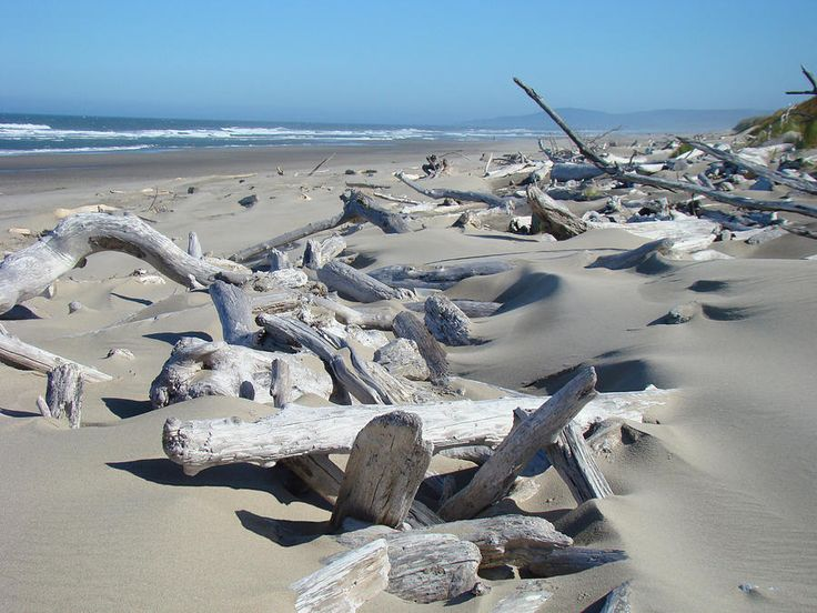 11 Best Driftwood Images On Pinterest At The Beach Drift Wood And