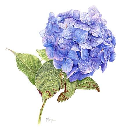 180 best Contemporary Botanical Art images on Pinterest ...