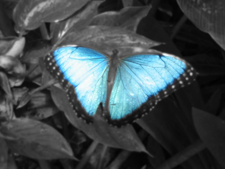 Image detail for color splash butterly picture by spring color splash photos