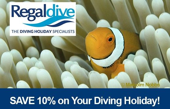 Fabulous February Savings in the Regaldive Sale #scuba #diving #dive #holiday #vacation #trip #travel #Regaldive
