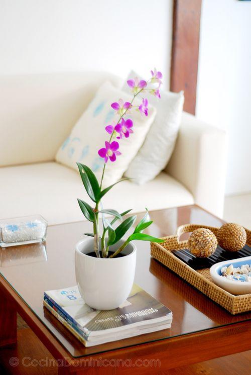 Aquí te doy algunas ideas de como cuidar tus bellas orquídeas para que duren más.