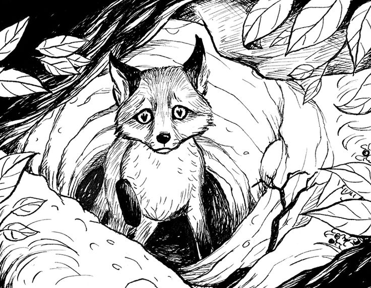 Book illustrations - by Marta Leonhardt #fox #ink #illustration