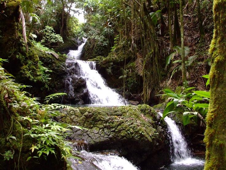 Rainforest On The Big Island: Rain Forest Waterfall Big Island, Hawaii