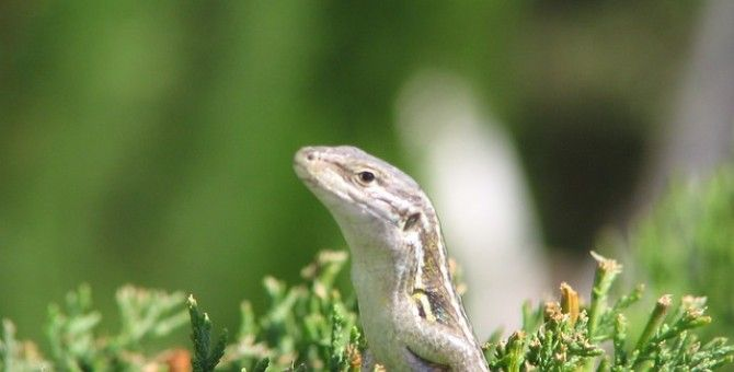 How To Get Rid Of Lizards Get Rid Of Rats And Lizards