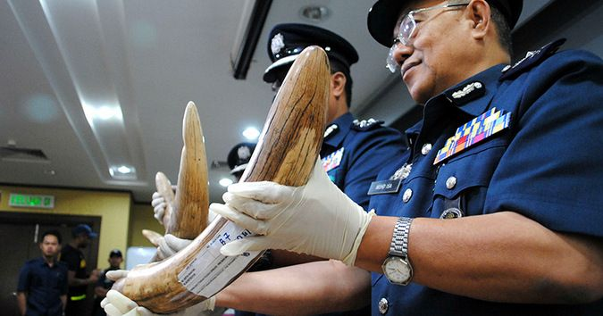 This is great news for authorities cracking down on poaching! Malaysia seizes nearly $1 million in trafficked wildlife at airport #africa https://buff.ly/2hxWSxn?utm_content=bufferedbec&utm_medium=social&utm_source=pinterest.com&utm_campaign=buffer