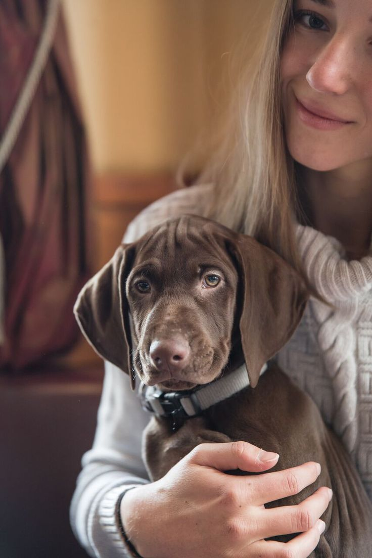 Rund um den Hund: Die ersten Wochen mit Welpe, wie ist es uns ergangen, Tipps & Erfahrungen