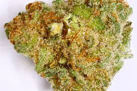 Buy Pennywise Hybrid Marijuana: Indica Dominant Hybrid - 70% Indica / 30% Sativa  THC: 8% - 15%, CBD: 12% a cross of sativas Jack the Ripper and Harlequin. Buy Marijuana Online | Buy Weed | THC and CBD Oil. Medical, Cannabis, Weed, Oil, THC, CBD, Wax, Edibles, Concentrates... Sale. Contact us now: ww.chem-meds.com