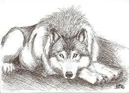 Resultado De Imagen Para Lobo Dibujo Proyectos Que Intentar