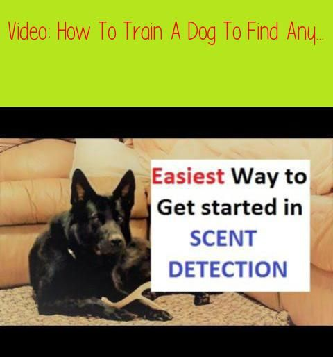 How To Train A Dog To Find Any Scent K9 1 Com Train A Drug Dog A