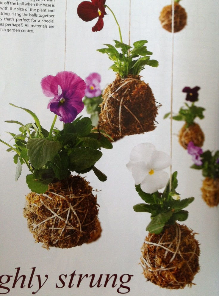 Durable Plants For The Garden: 1000+ Ideas About Small Potted Plants On Pinterest