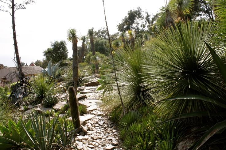 L'une des premières et grandes qualités des jardins du Domaine du Rayol, véritable invitation au voyage à travers les paysages méditerranéens du monde, réside dans leur capacité à créer de l'émotion. photo F Arnal 04/2013