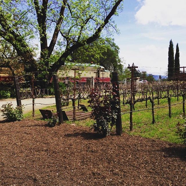 You can always find us here, tucked between the vines! The #NapaValleyWineTrain runs from our Napa station all the way to St. Helena. Not only are we serving up world-class food and views, but we also offer rides that make stops for exclusive tours and wine at famed #NapaValley wineries. We're here to share the best of #WineCountry with all our riders! Book your adventure at winetrain.com 📸 by @kissedbywine #AllAboard
