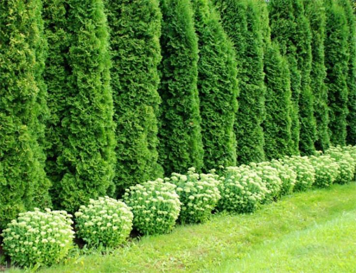 Formation of hedges in the country