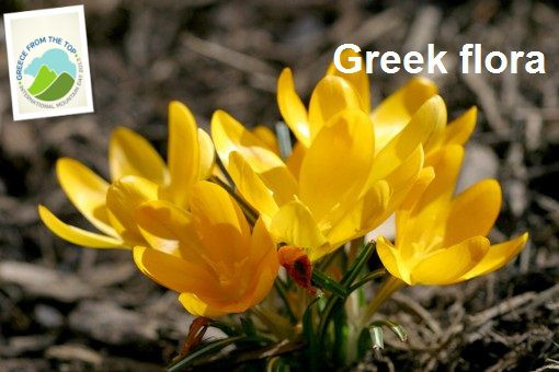 VISIT GREECE| Greece from the Top, Greek Flora!