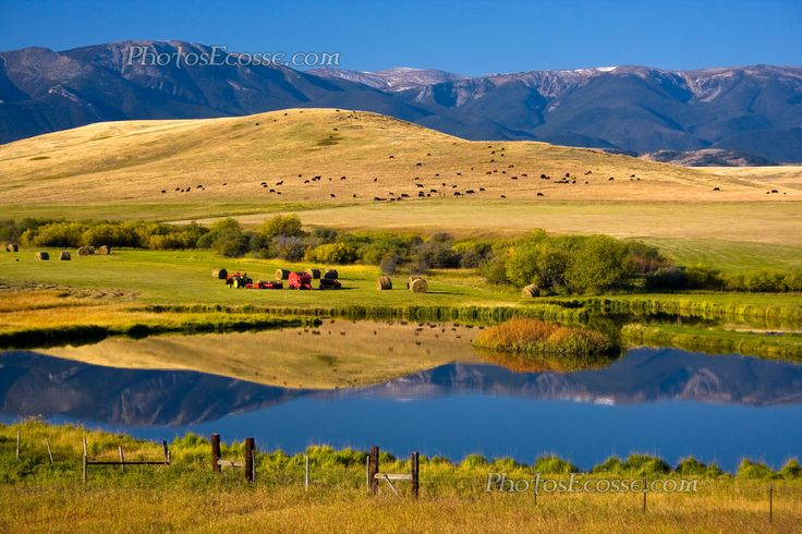Montana Ranch scene. USA.