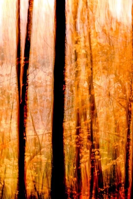 Fall Blaze by Michael Aguirre on Capture Minnesota // Abstract is a fun way to express the many colors of a Minnesota Fall. This scene was rich with orange, yellow, and some red.