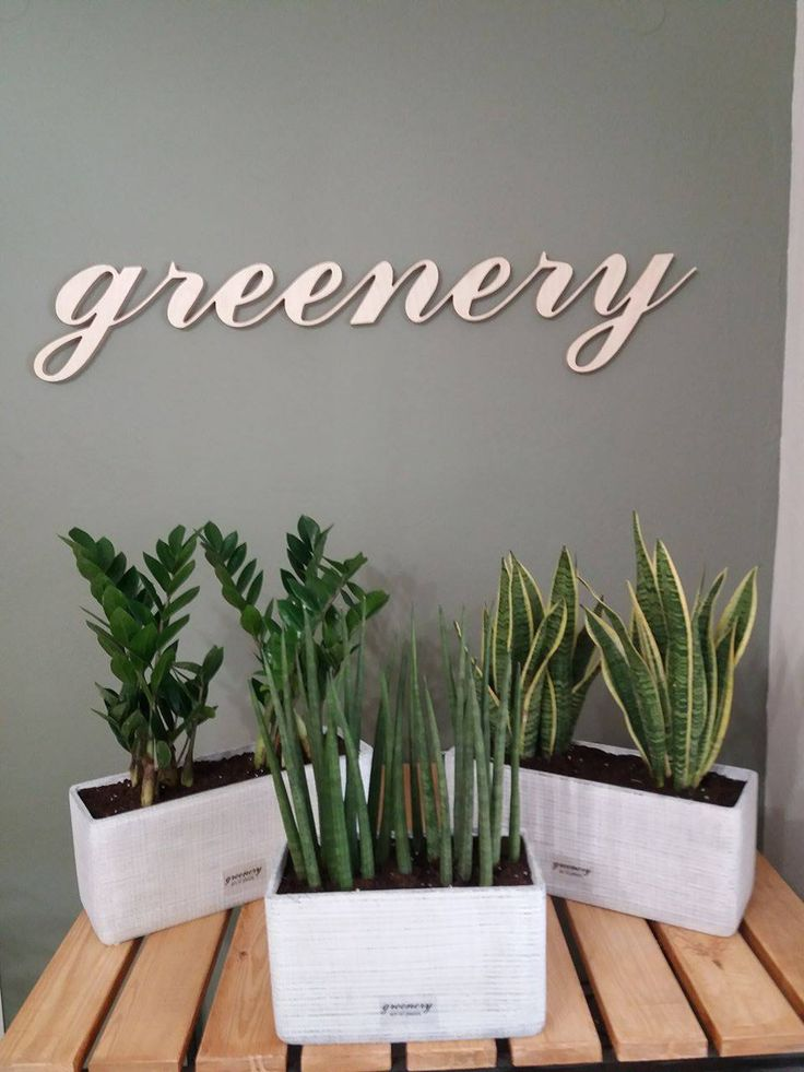 Decoration with sansevieria #greenery #pots #planters #airplants #succulents #cactus #plants #chania #greece