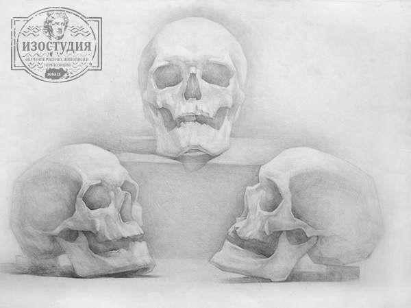 Уроки рисунка черепа в Днепропетровске. Научиться рисовать череп простым карандашом. Академический рисунок черепа