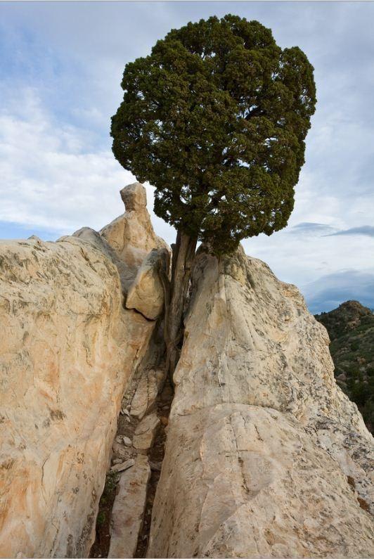 tenacious persistence / mike Blanchard  S'EPANOUIR DANS LE DEPLOIEMENT DE SES AILES PEUT ÊTRE LONG, MAIS QUEL ENVOL GRISANT!