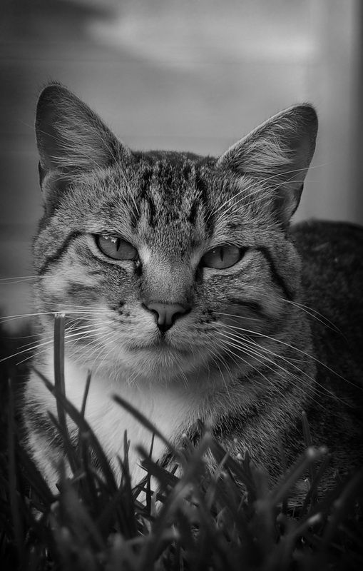 Best Cats Photography Images On Pinterest Animal Beautiful - This photographer is celebrating stray cats through majestic portrait photographs