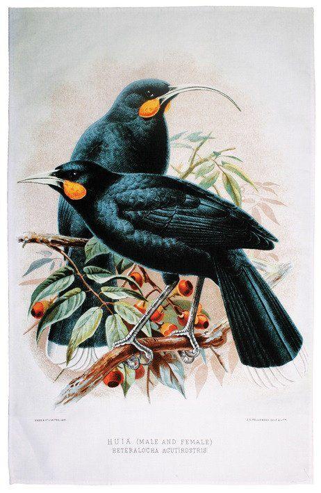 Huia Bird of NZ Tea Towel. A stunning Tea Towel that features the Huia bird of New Zealand.
