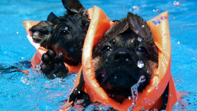 Too Cute!: Slow Motion Puppies : Video : Animal Planet