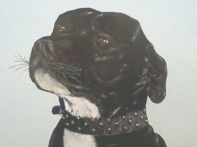 Close up of my completed art work.  Done in oils.  My dogs dad ( Harley ).